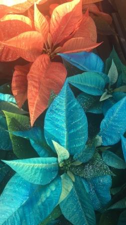 2BD - Poinsettias_copper teal 2